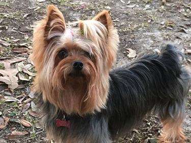 Bella at the Dog Park in Mandeville, LA
