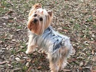 LilyBelle at the Dog Park in Mandeville, LA